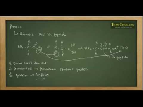 Belajar Kimia : Karbohidrat, Protein, Lipid Bagian 2